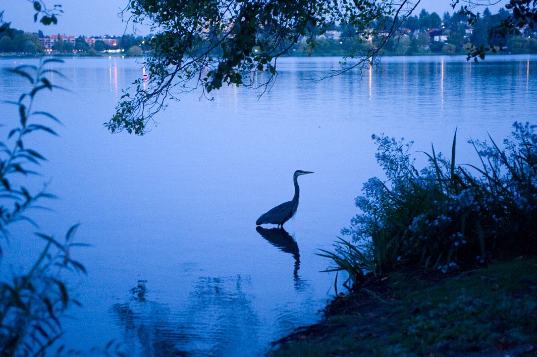 Blue Heron At Green Lake Dorpatsherrardlomont Math Wallpaper Golden Find Free HD for Desktop [pastnedes.tk]